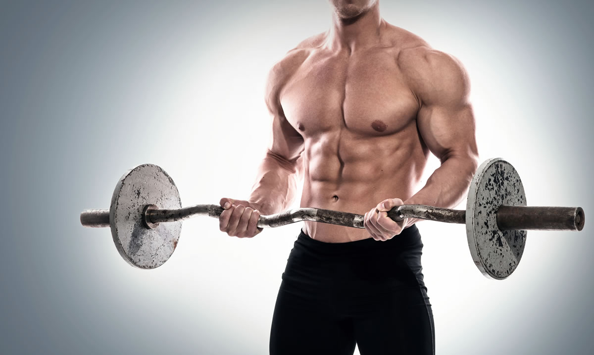 creatine muscle