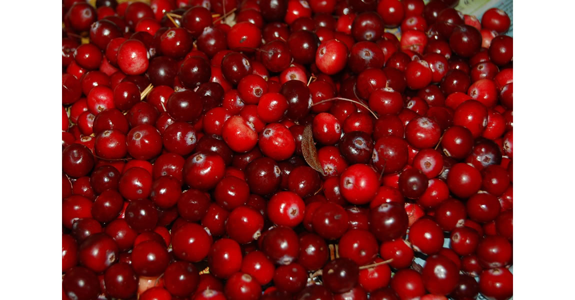 Cranberry Extract prevent urinary tract infections