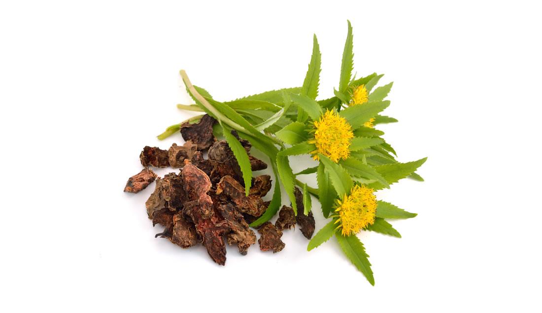 Golden Root Extract - Rhodiola